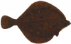 Plaice is the principal commercial flatfish in Europe